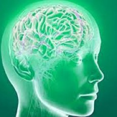 marijuana might prevent Alzheimer's