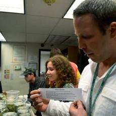 colorado marijuana dispensaries