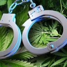 Marijuana Police Handcuffs