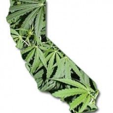 California Marijuana