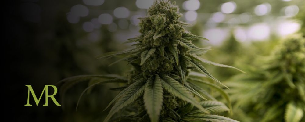 "Florida Court Rules Vertical Integration In Marijuana Industry ""Unconstitutional"""