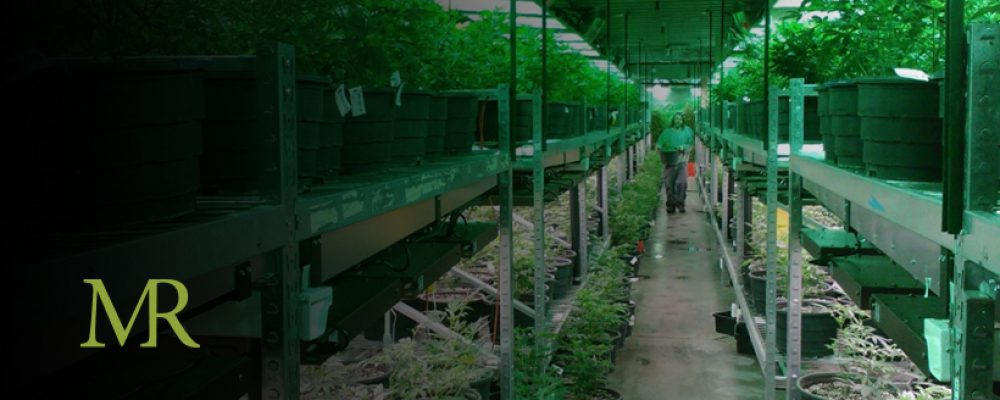 Is Michigan's Retail Marijuana Industry Being Set Up To Be Dominated By Big Players?