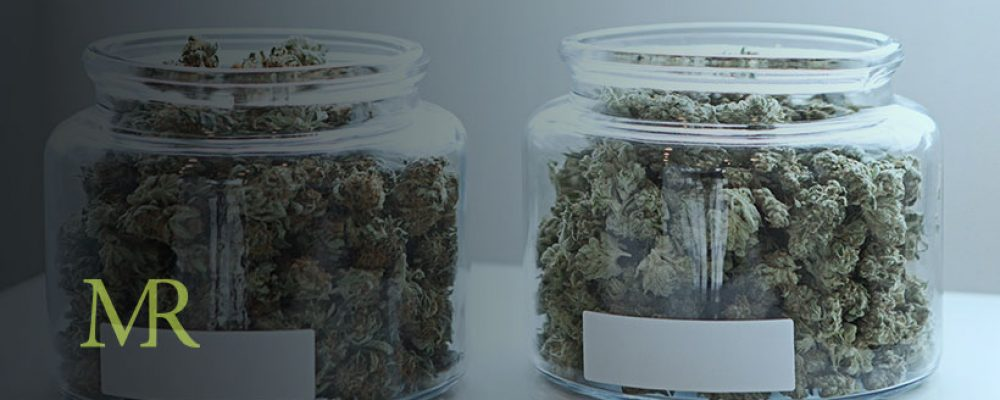The Secret Loophole That Allows Growers In Newly-Legalized States To Source New Strains
