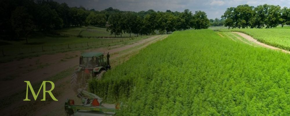USDA Report Highlights Challenges Hampering Hemp Industry Growth