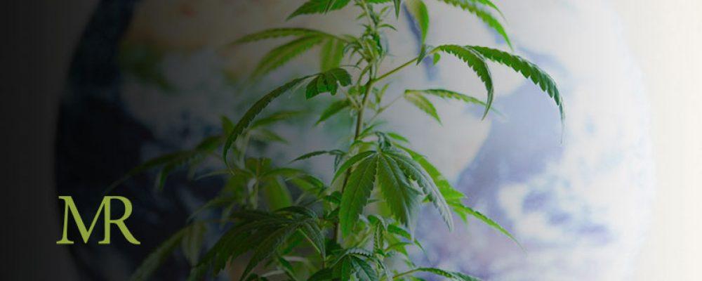 Global Cannabis Sales To Reach $42.7 Billion By 2024