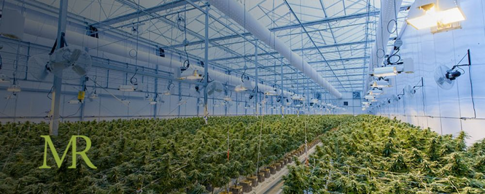 Why The Largest Cannabis Company in the World Still Won't Enter the US Market